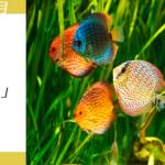 スクロールECキャンペーン熱帯魚