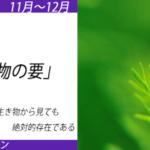 20191112水草